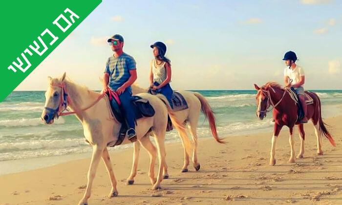 5 טיול רכיבה על סוסים לאורך חוף דור