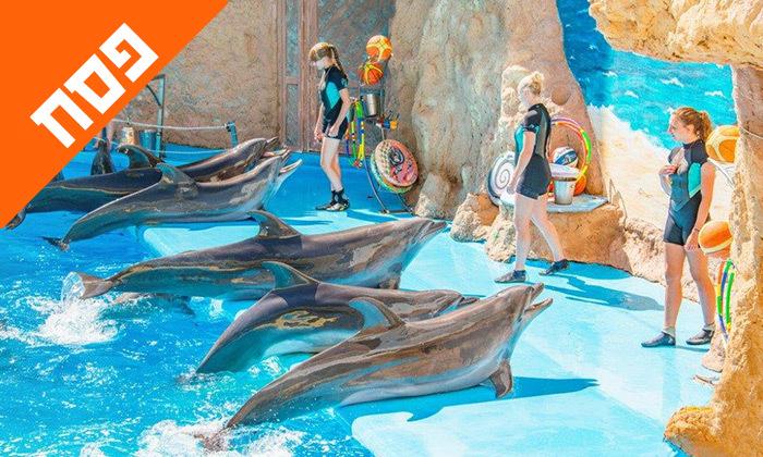 10 חופשת פסח משפחתית באודסה, כולל מופע דולפינים, פארק חבלים וגן חיות