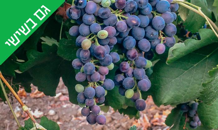 5 סיור וטעימות יין ביקב Bravdo, כרמי יוסף