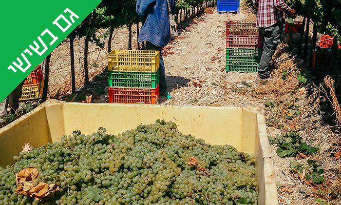11 סיור וטעימות יין ביקב Bravdo, כרמי יוסף