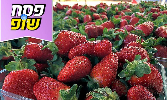 4 קטיף תותים בתותלאנד - משק טל, הוד השרון