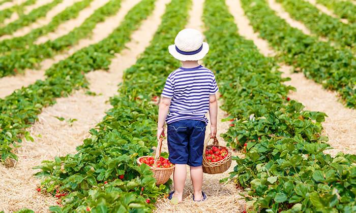 5 סתלבתות - קטיף תותים עצמי, הוד השרון