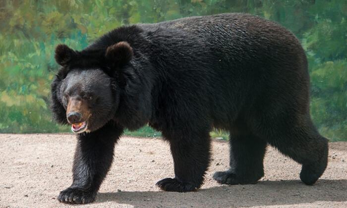 5 יולי-אוגוסט באודסה - טיול מאורגן למשפחות כולל גן חיות ופארק חבלים