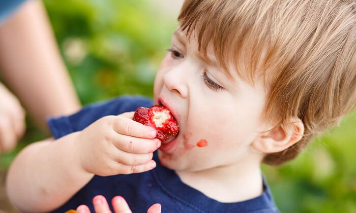 2 קטיף תותים, סיור בטרקטור ופינת חי במשק בגבעה, גדרה
