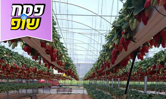3 קטיף תותים, סיור בטרקטור ופינת חי במשק בגבעה, גדרה