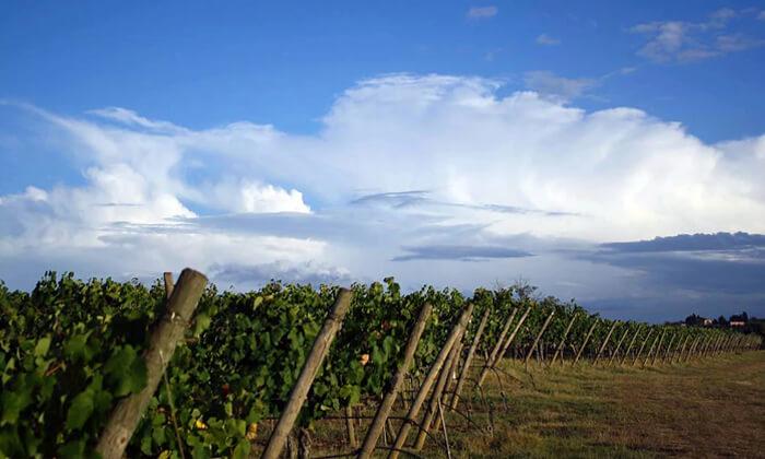 5 סיור טעימות יין ביקב נחל חרמון, שאר ישוב