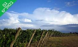 סיור טעימות יין