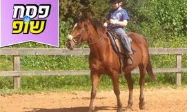 קייטנת רכיבת סוסים חוה