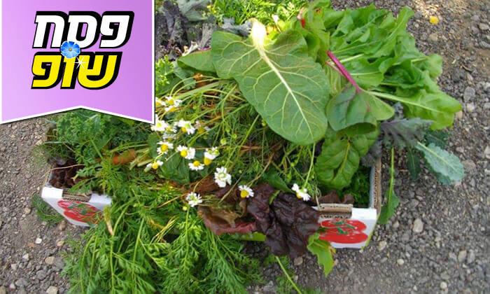 """3 משתלת הרא""""ה, בית חזון - קטיף ירקות"""