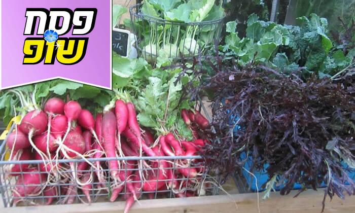 """4 משתלת הרא""""ה, בית חזון - קטיף ירקות"""