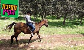 טיול רכיבה על סוסים