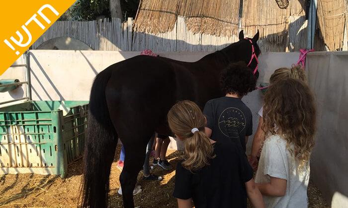6 קייטנת רכיבה על סוסים - החווה של לאהנר, בני ציון