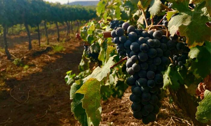 2 סיור וטעימות יין - יקב אבוהב, צפת