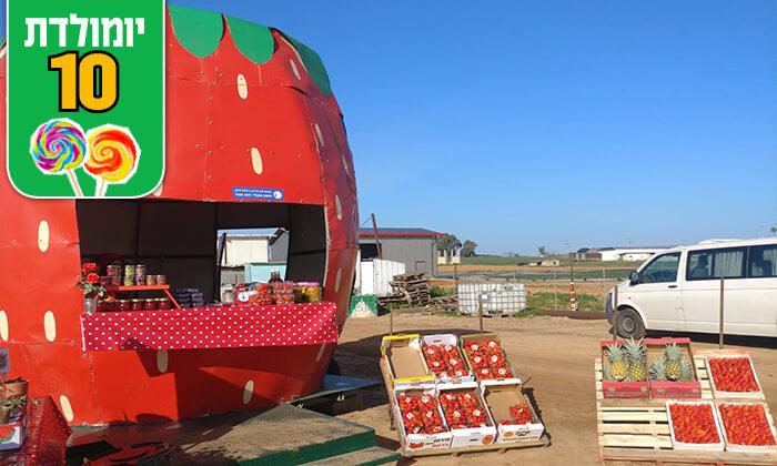 5 קטיף תותים במשק אקלר, קדימה