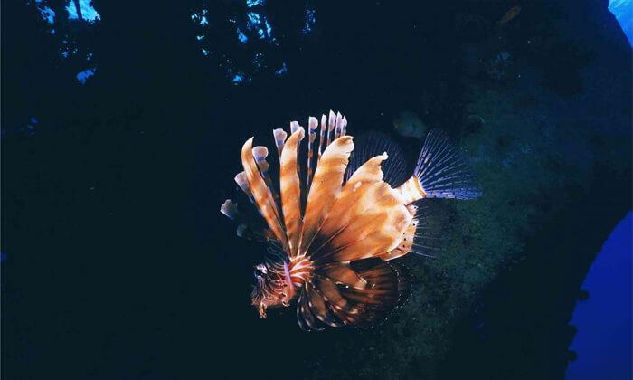 4 קורסי צלילה במועדון Ahla Diving,אילת