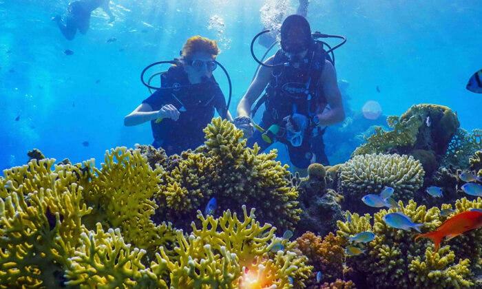 2 קורסי צלילה במועדון Ahla Diving,אילת