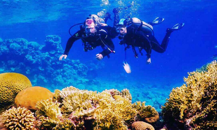 7 קורסי צלילה במועדון Ahla Diving,אילת