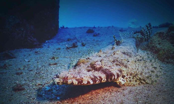6 קורסי צלילה במועדון Ahla Diving,אילת