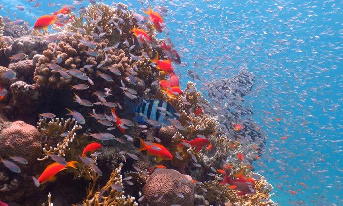 4 צלילת שנורקלים באילת, מועדון Ahla Diving