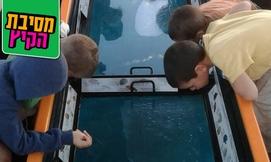 סירת זכוכית לקבוצה