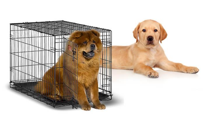 3 כלובי אילוף לכלב ברשת אניפט