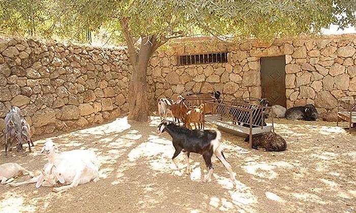 8 מוזיאון עין יעל - סיור חווייתי והשתתפות במגוון סדנאות מלאכה לקבוצה, ירושלים