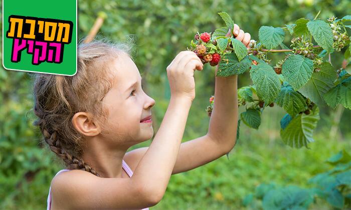 4 קטיף פירות יער בחוות הסוס והדובדבן, מושב אודם