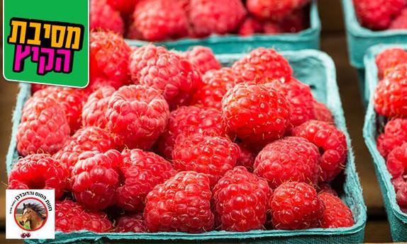 קטיף ואכילת פירות יער בגולן