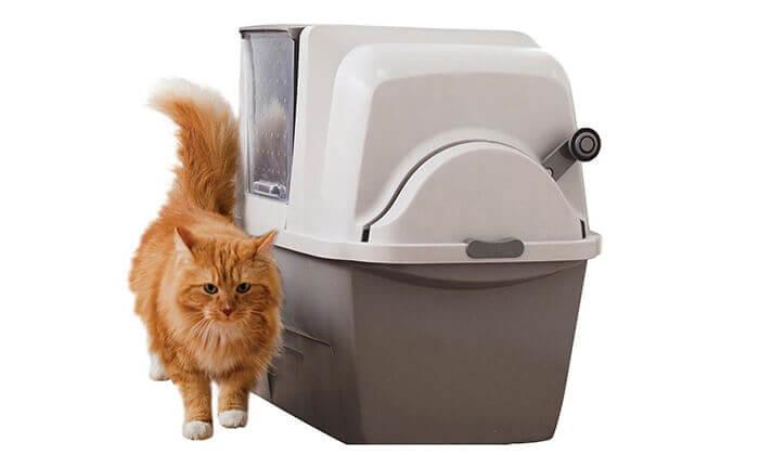 3 שירותים אוטומטיים לחתול