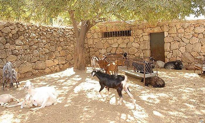 5 פעילות משפחתית במוזיאון עין יעל, ירושלים