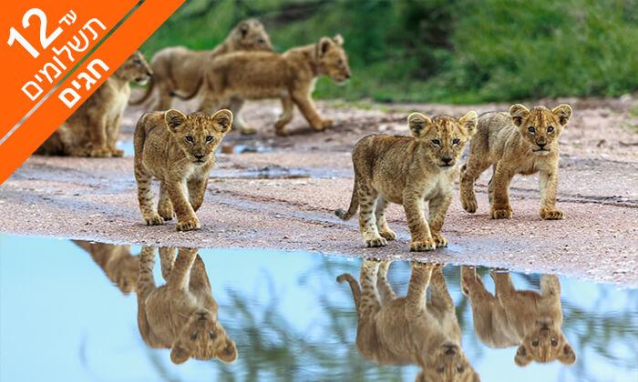 4 טיול מאורגן 9 ימים בדרום אפריקה -טבע פראי ואורבניות