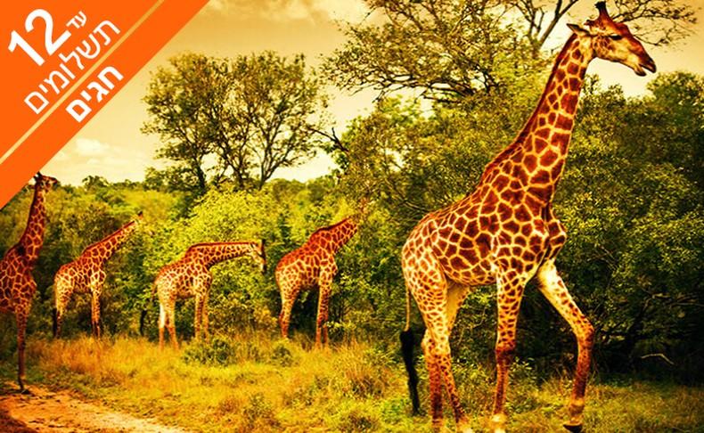 מאורגן 10 ימים בדרום אפריקה