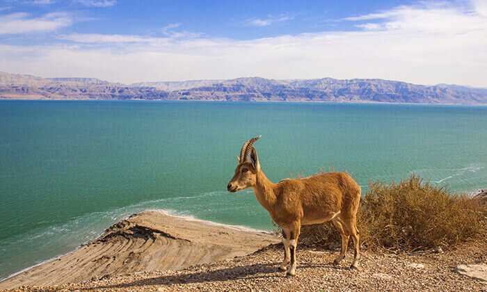 6 דיל ל-24 שעות: חמי עין גדי - כניסה ל-Sea of Spa