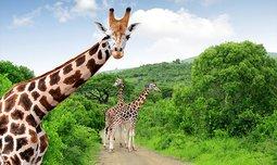 טיול משפחות לספארי בטנזניה