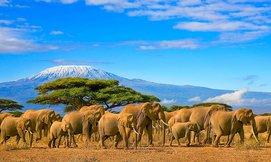 מאורגן לספארי בטנזניה וזנזיבר
