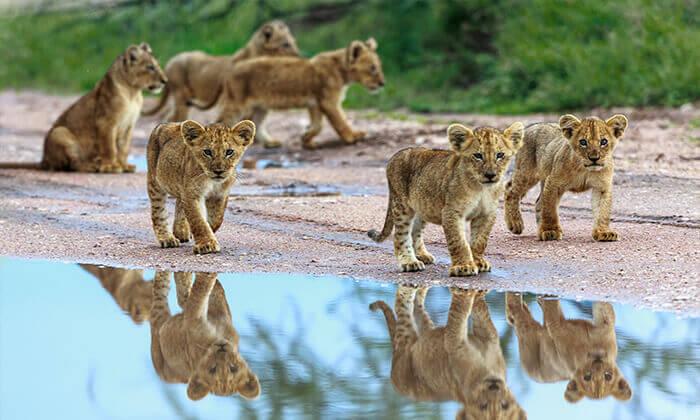 3 טיול מאורגן - דרום אפריקה 10 ימים