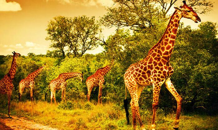 7 טיול מאורגן - דרום אפריקה 10 ימים