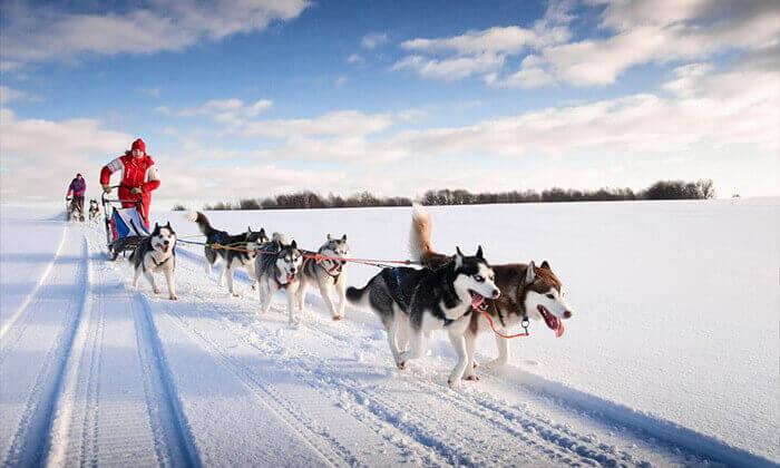 2 טיול מאורגן ללפלנד - ספארי חורף בארץ זוהר הצפון