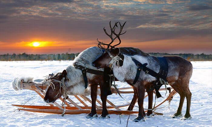 4 טיול מאורגן ללפלנד - ספארי חורף בארץ זוהר הצפון
