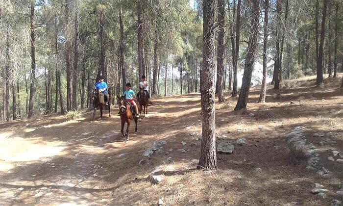 4 טיול רכיבה זוגי בגליל על סוסים - חוות סוסי אדמה, אלון הגליל