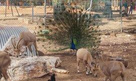 כניסה לחווה החקלאית לגעת בטבע