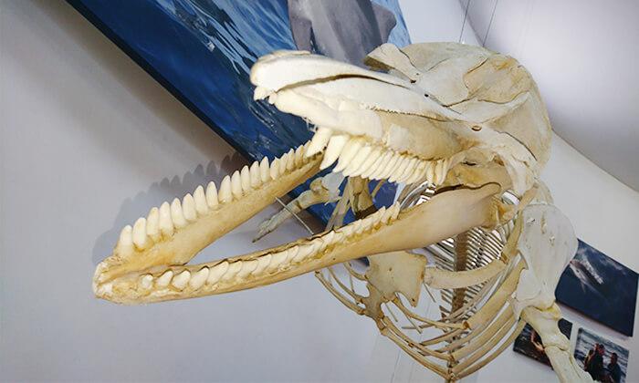 5 השתתפות בסיור לבחירה במרכז הדולפין והים, אשדוד