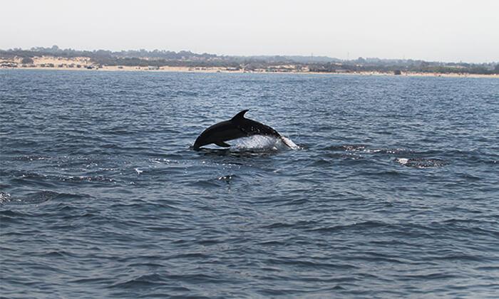 3 השתתפות בסיור לבחירה במרכז הדולפין והים, אשדוד