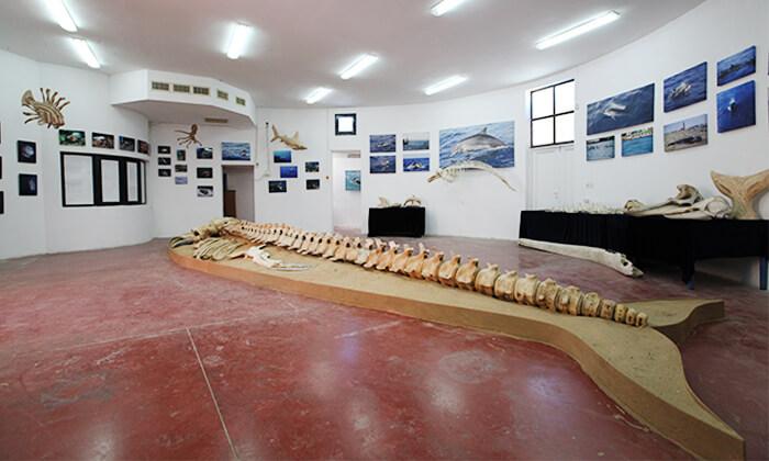 10 השתתפות בסיור לבחירה במרכז הדולפין והים, אשדוד