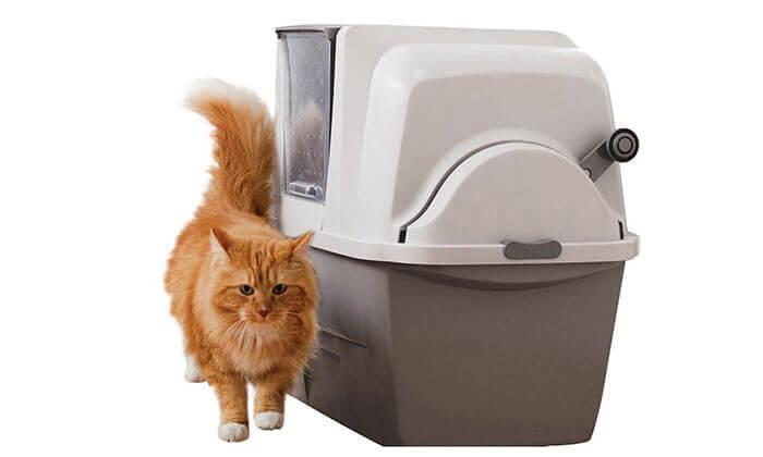 3 שירותים אוטומטים לחתול