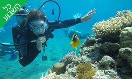 צלילה ליחיד באתר אלמוגים