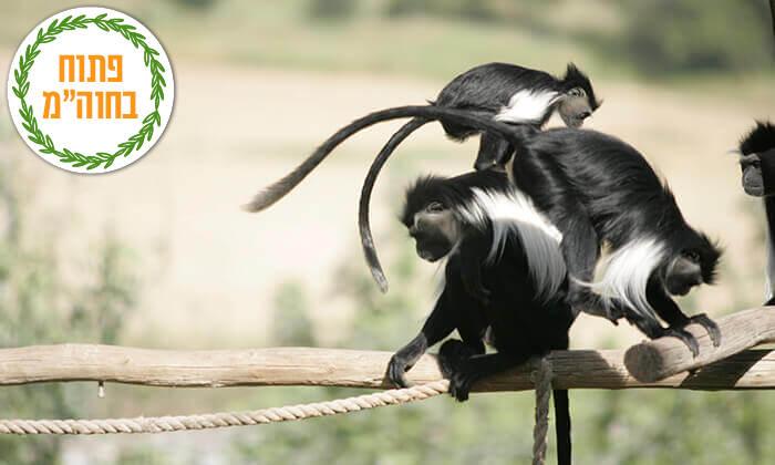 3 מקלט הקופים הישראלי - כניסה ופעילויות ביער בן שמן