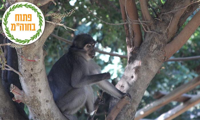 8 מקלט הקופים הישראלי - כניסה ופעילויות ביער בן שמן
