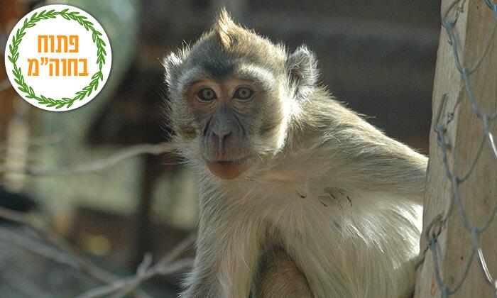 2 מקלט הקופים הישראלי - כניסה ופעילויות ביער בן שמן