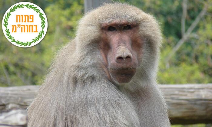 9 מקלט הקופים הישראלי - כניסה ופעילויות ביער בן שמן